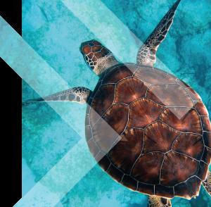 Turtle BG 01