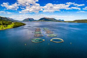 fish farm 01