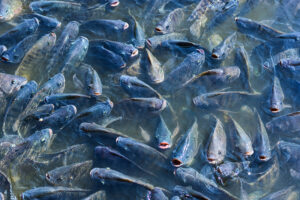 fish farm 02
