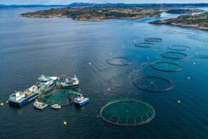salmon farming 01