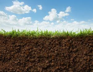 Soil Association Featured