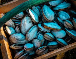 ACIG meeting - Feed resilience and novel aquafeed